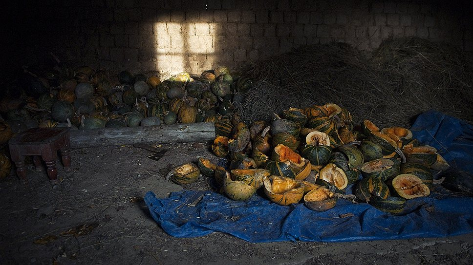 В этом году Муслим собрал урожай — тыквы, чеснок, кукурузу