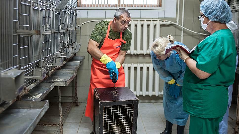Работа с инфицированными животными — одна из самых опасных