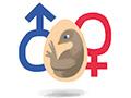 Петушок или курочка