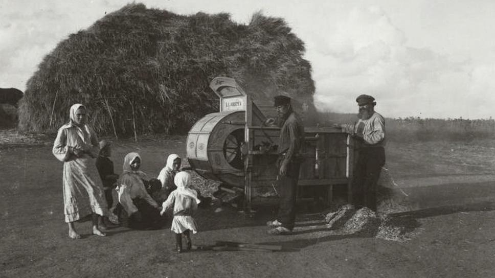 Жалуются на неудовлетворительный урожай подсолнуха в районе Екатеринодара
