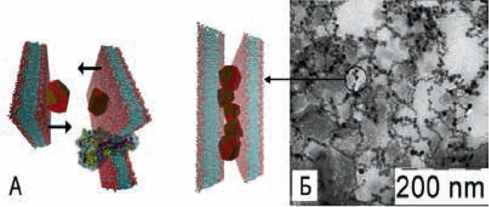 А — модель взаимодействия вирусных мембран и наночастиц диоксида церия; Б — микрофотография вакцины Vaxigrip после взаимодействия с наночастицами диоксида церия