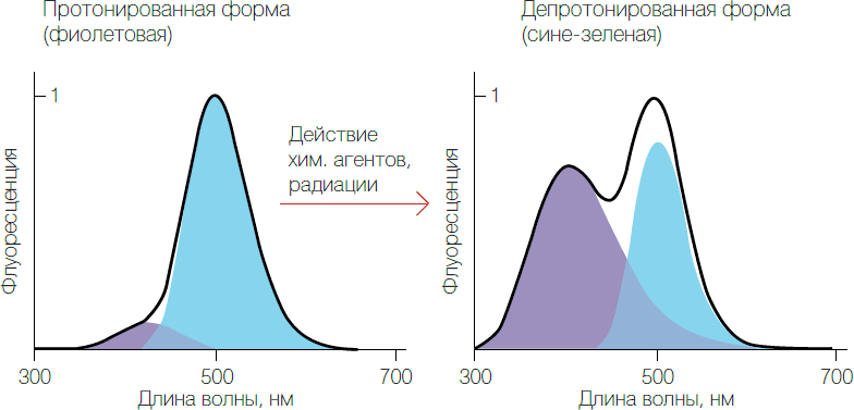 Рис. 2. Изменение спектров флуоресценции целентерамид-содержащих белков под действием химических реагентов и радиации