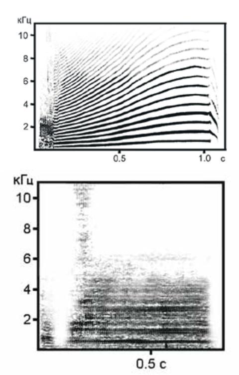 Сонограммы близкодистантных криков косаток, предназначенных для общения на дистанции от десятков метров до нескольких километров. Представлены сонограммы двух разных типов криков