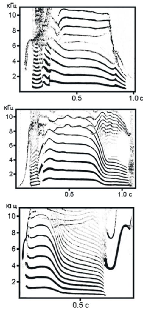Сонограммы дальнедистантных криков косаток, которые они издают при общении на дистанции нескольких километров. Слева и в центре — два звука одного типа от разных семей, справа — звук другого типа