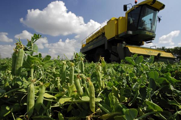 Сельскохозяйственной деятельностью врайоне занимаются 91организация, 385 КФХ и39тыс. подсобных хозяйств