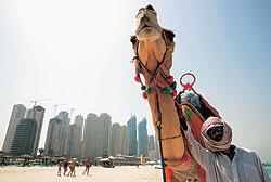 На пляже отеля Le Royal Meridien всегда есть верблюд, готовый прокатить туристов