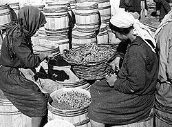 В Крыму гроздья состригали ножницами, в Токае — обрывали руками