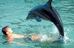 """На съемках фильма """"Флиппер"""" использовались каскадеры: стойку на хвосте вместо дельфинихи Митци делал дельфин Мистер Гиппер"""