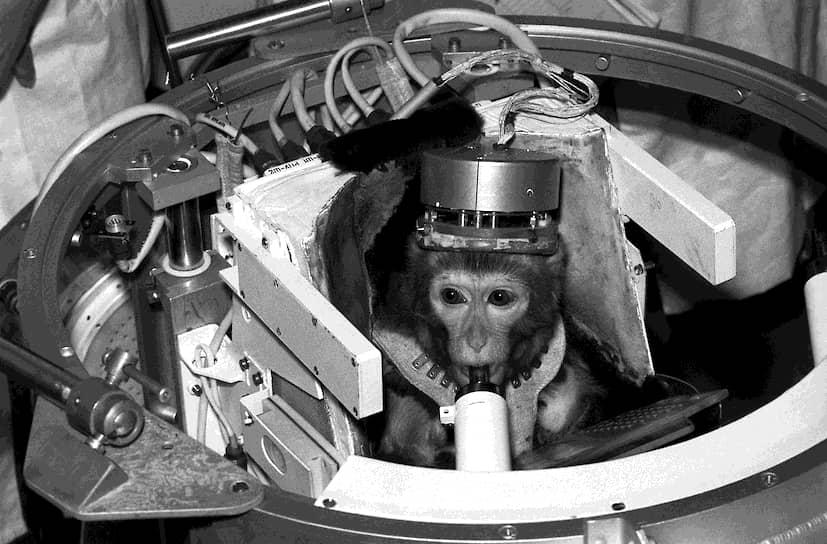 Обезьяна Дрема на корабле «Космос-1887» побывала в космосе в 1987 году