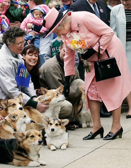 Одно из любимых увлечений королевы — разведение собак и скаковых лошадей. За всю жизнь королевы в ее семье было более 30 собак породы корги