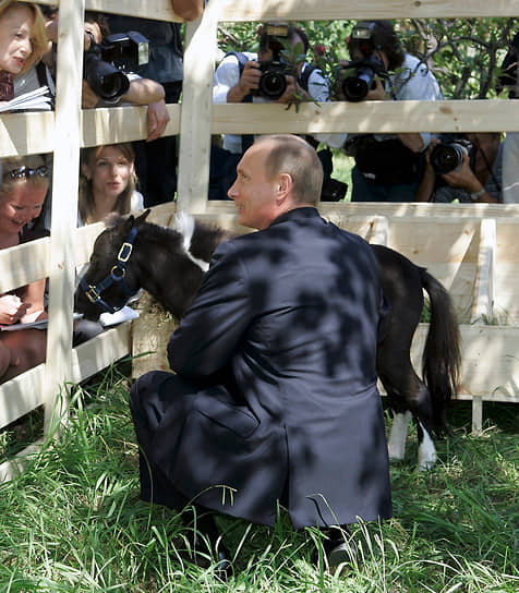 В 2005 году в Казани, где проходили международные соревнования по конному спорту, президент Татарстана Минтимер Шаймиев подарил Владимиру Путину карликовую лошадь. Маленького скакуна, рост которого едва превышает 50 см в холке, звали Чип, но затем стали называть Вадик. Он живет в резиденции Ново-Огарево