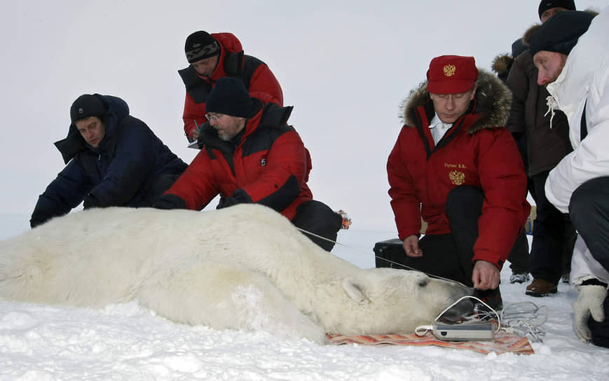 В 2010 году Владимир Путин совершил экспедицию в Арктику на Землю Франца-Иосифа. Целью экспедиции было изучить ареалы обитания белого медведя. Господин Путин также надел на одного из них спутниковый ошейник. Но через несколько месяцев специалисты сообщили: медведь сумел избавиться от «маячка»