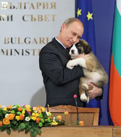 В 2010 году премьер-министр Путин получил в подарок от болгарского коллеги Бойко Борисова щенка каракачанской овчарки. Чтобы выбрать кличку новому любимцу, был организован всероссийский конкурс. Его победителем стал пятилетний Дима Соколов, предложивший имя Баффи. Сообщалось, что пес живет в резиденции Ново-Огарево