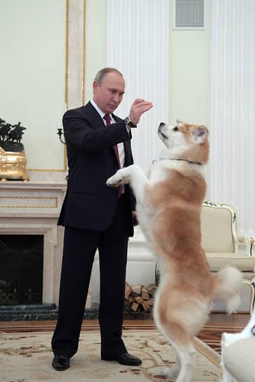 В 2012 году губернатор северной японской префектуры Акито Норихиса Сатакэ подарил Владимиру Путину щенка породы акита-ину, которого назвали Юмэ (в переводе с японского — «мечта»). Имя для собаки господин Путин выбрал сам. Сообщалось, что Юмэ живет в Ново-Огарево