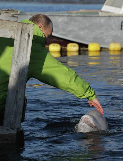 31 июля 2009 Владимир Путин побывал на острове Чкалова в Охотском море, где познакомился с белухой Дашей, на которую нужно было укрепить спутниковый передатчик. Несмотря на уверения специалистов, что кит не будет есть из рук человека, господину Путину удалось покормить Дашу. В марте 2010 года она попала в ледовый плен, но сумела спастись. Ученые в последний раз сообщали о ней летом 2013 года
