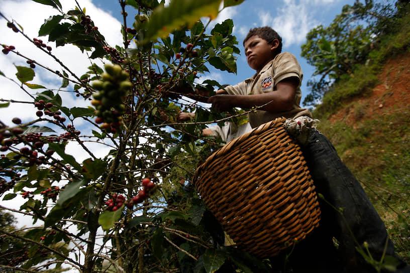 Более 70% от всех работающих детей заняты в сельском хозяйстве. Они трудятся на фермах и страдают от вредных последствий вдыхания пестицидов и других химических веществ