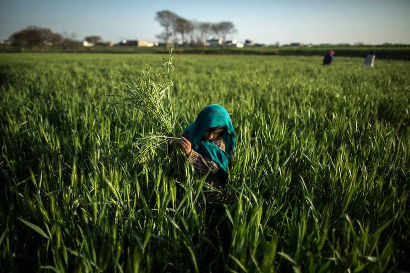 В Кении, например, закон запрещает нанимать детей до 16 лет на промышленные предприятия, но допускает их трудоустройство в аграрном секторе. Учитывая, что промышленных предприятий в этой стране не так уж и много, запрет мало на кого распространяется