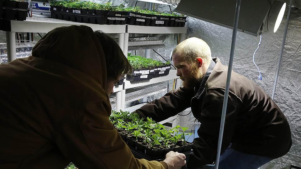 Как Колорадо заработал на марихуане $3,5млн