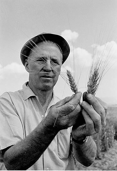 В 1940 году члены знаменитой династии создали Фонд братьев Рокфеллер, который оказывает финансовую поддержку научно-исследовательским, общественно-политическим, профсоюзным организациям. Один из институтов, созданных Рокфеллерами, — Аграрный институт в Мексике, инициативы которого позволили резко увеличить производительность сельского хозяйства в середине XX века<br> На фото: американский агроном Норман Борлоуг, лауреат Нобелевской премии 1970 года в Аграрном институте