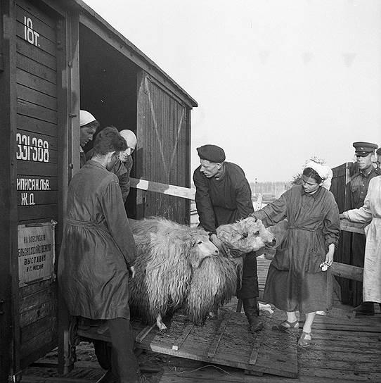 Подготовка к открытию выставки после перерыва, 1954 год
