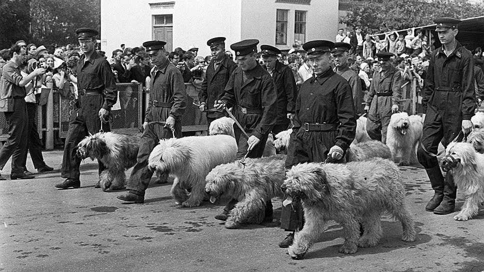 Перечень утраченных объектов ВДНХ насчитывает несколько десятков сооружений<br>На фото: выставка собак на ВДНХ, 1967 год