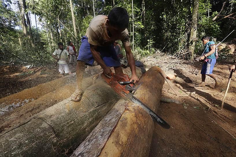 Бразильская армия проигнорировала просьбы индейцев о помощи, не решилась на конфискацию имущества лесорубов и избегает конфликтов с ними