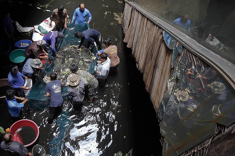 Торговый центр в Таиланде, раньше заполненный покупателями, теперь заброшен и кишит рыбой после того, как был затоплен