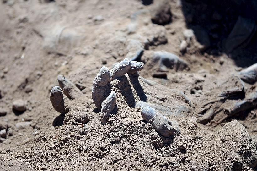 Тикрит, Ирак. Раскопки одного из 12 массовых захоронений иракских солдат, убитых «Исламским государством», находящегося на территории бывшей резиденции Саддама Хусейна