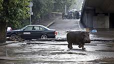 Тбилиси затопило в результате аномального ливня