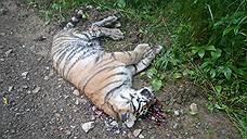 Полиция вышла на тигриный след