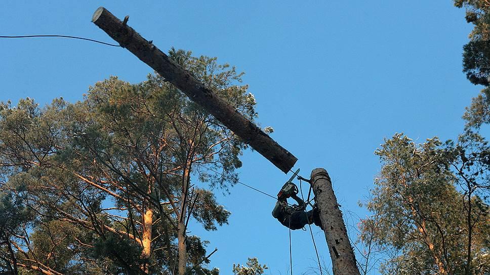 Как муниципальные депутаты и жители Хамовников встали на защиту парка «Лужники»