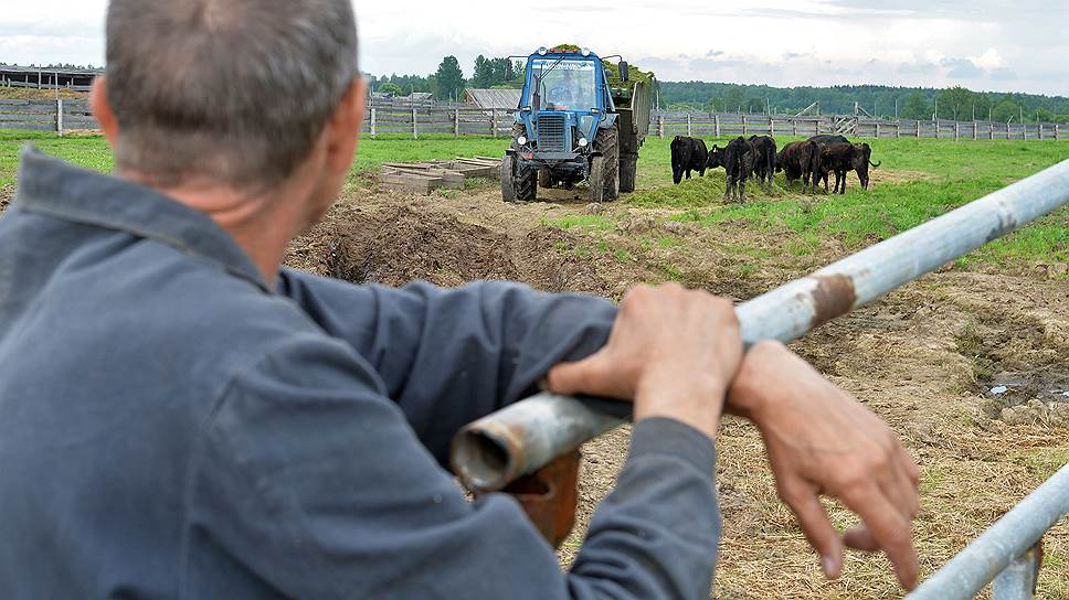 Почему малый бизнес не спешит заниматься сельским хозяйством