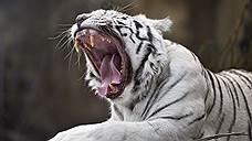 Российские зоопарки не хотят жить по закону джунглей