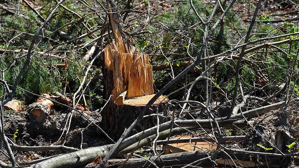 Экологи обеспокоены скоростью гибели российских лесов