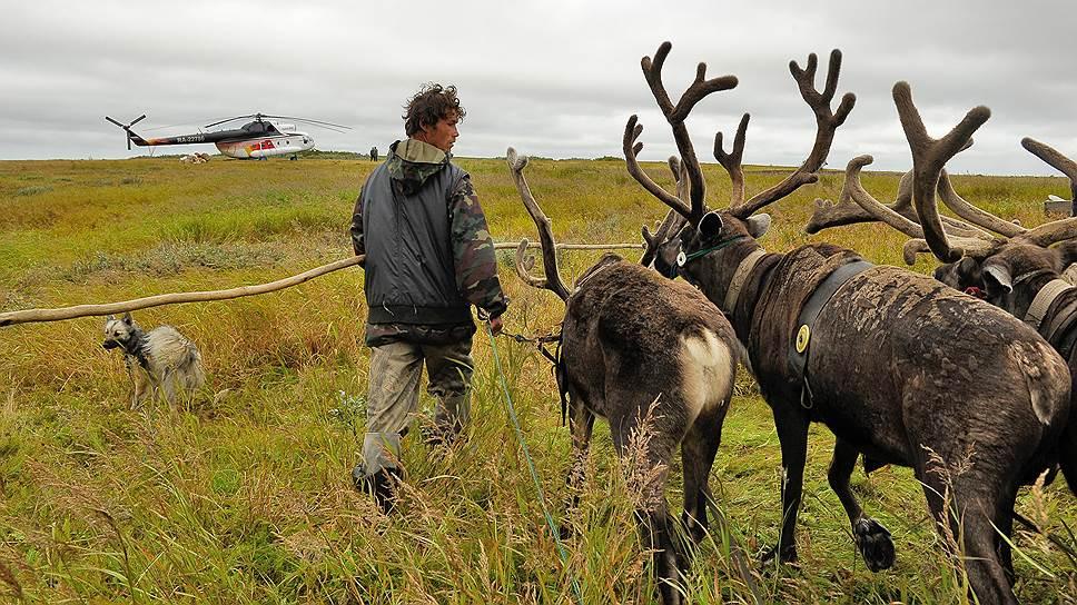 В Ямало-Ненецком автономном округе зафиксирован первый летальный случай заражения сибирской язвой