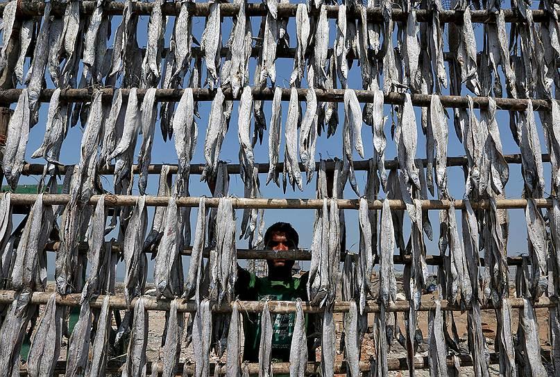 Мумбаи, Индия. Мужчина сушит рыбу