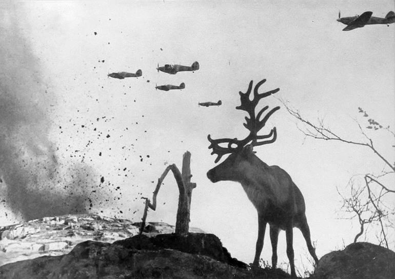 Олень Яша на войне, 1941