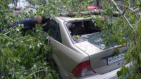 Лес рубят, крыши летят  / Что делать, если на машину упало дерево