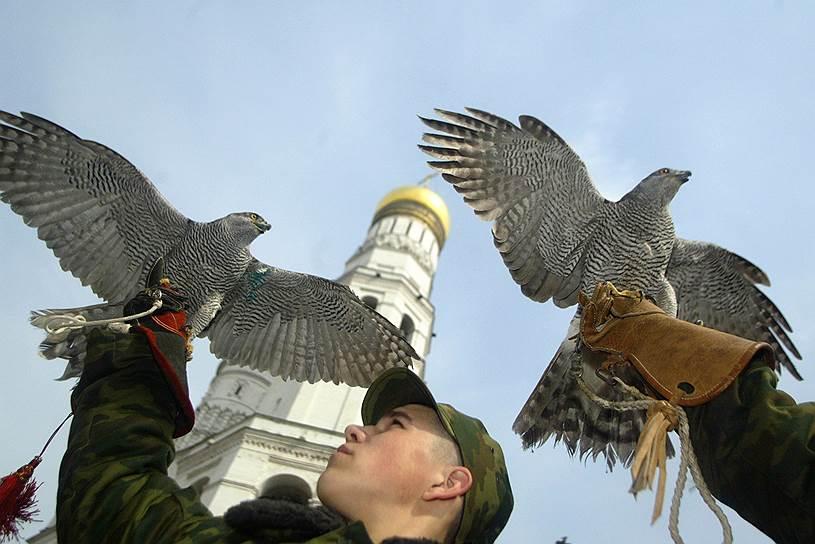 Удивительно, но в черте города сейчас можно встретить хищную птицу, и не только ручную
