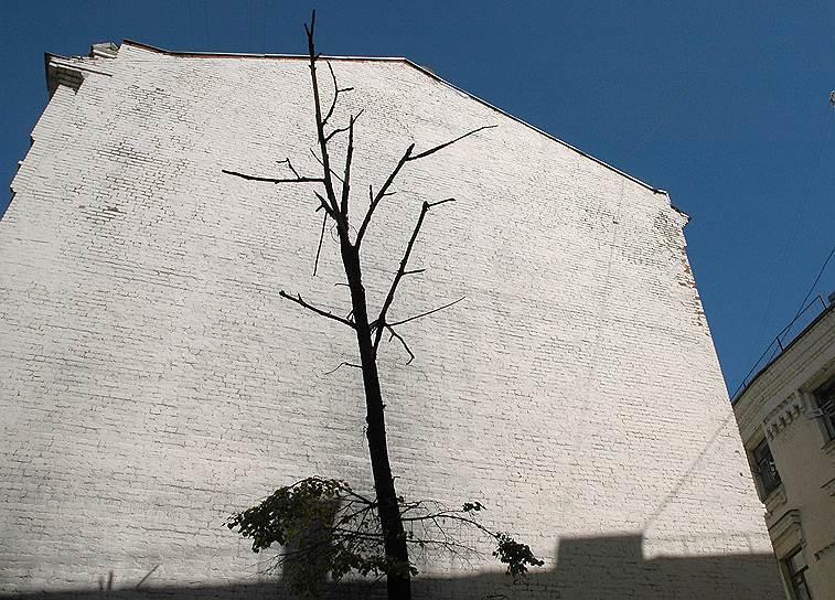 Деревья в столице умирают не только от старости, но и от химических реагентов для борьбы со снегом и льдом на дорогах