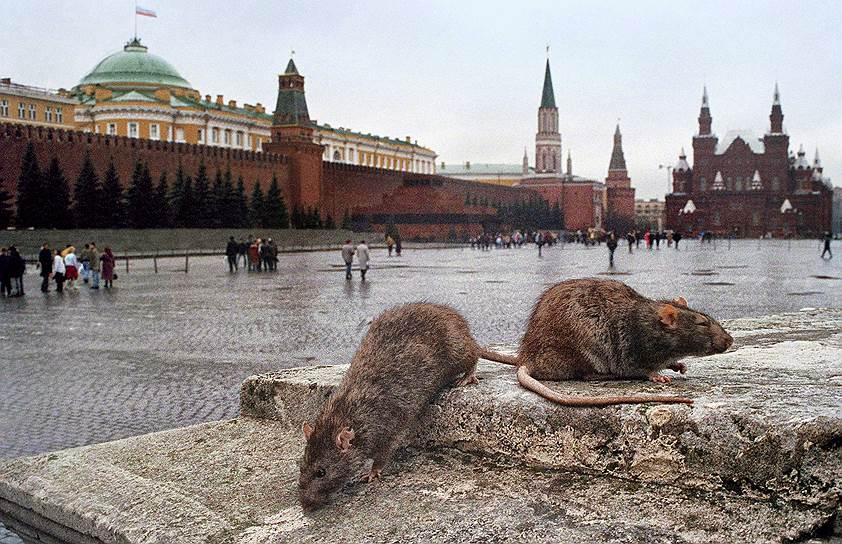 За последние 10–15 лет поголовье серых крыс в Москве существенно сократилось
