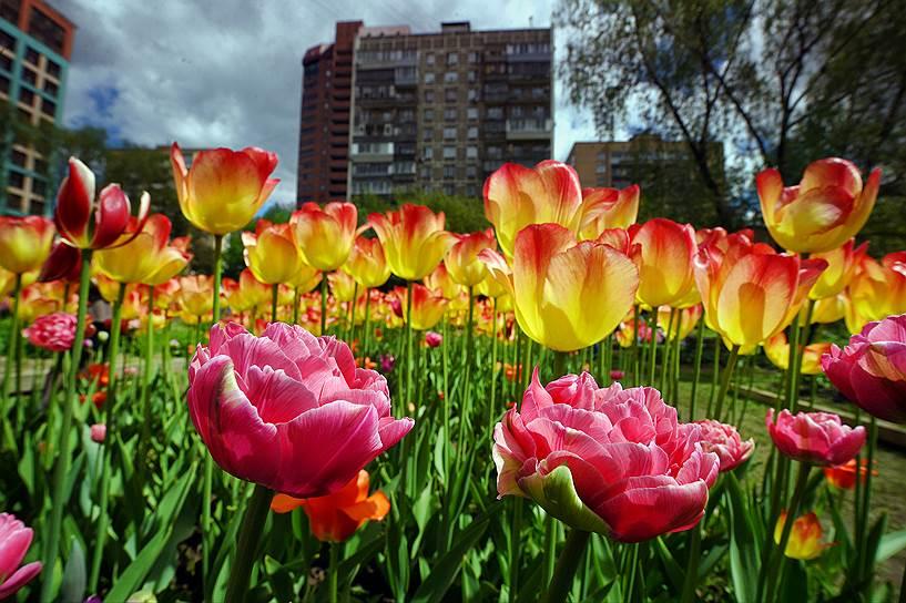 Ботанический сад «Аптекарский огород» плотно окружен городом, но внутри сохраняет свою экосистему