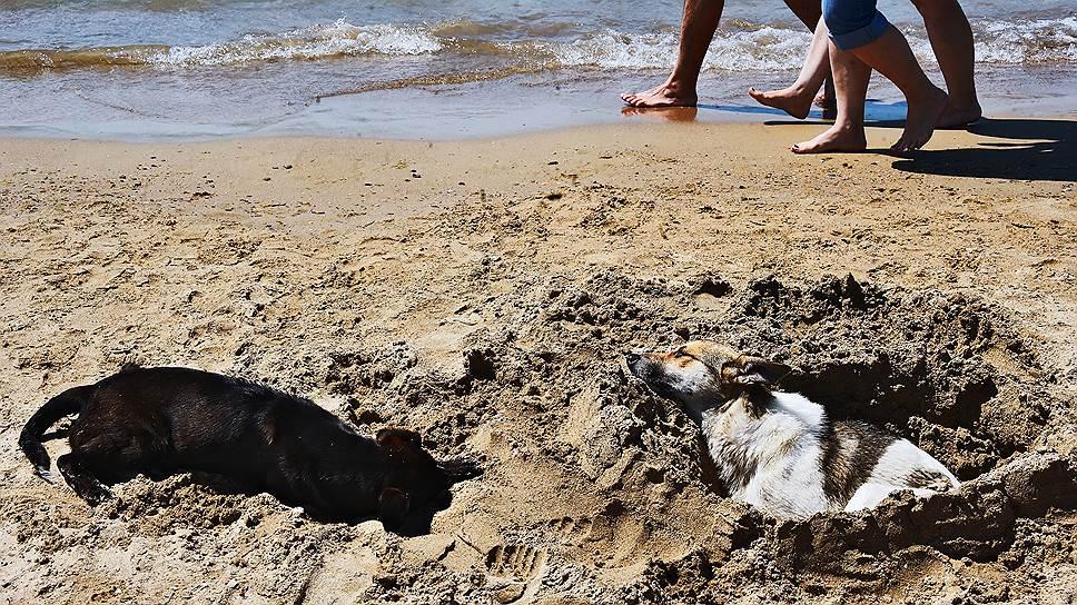 Песчаные пляжи — большая редкость в Краснодарском крае