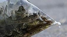 «Русская аквакультура» заплыла в Норвегию