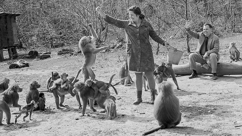В 70-е годы сухумский питомник стал мировым центром приматологии