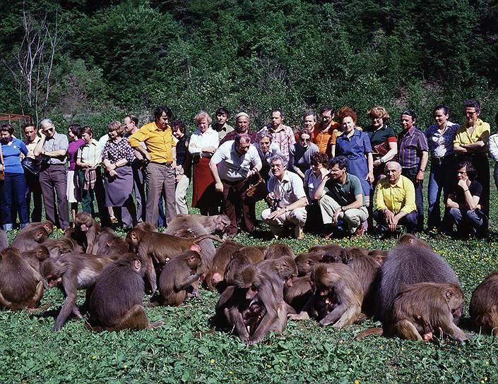 Когда-то в сухумский питомник приезжали делегации со всего мира