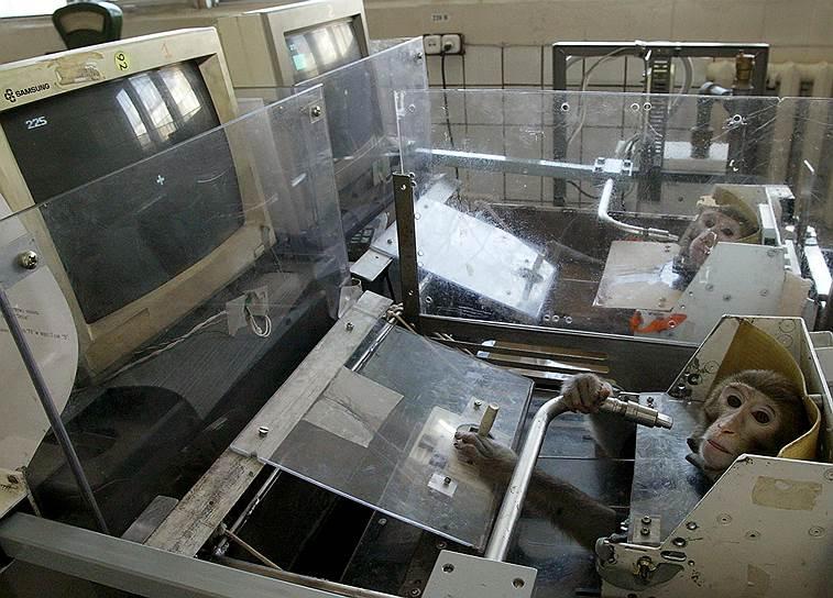 Участие в космических исследованиях еще не так давно были одним из главных направлений работы НИИ приматологии