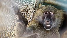 Универсальный примат