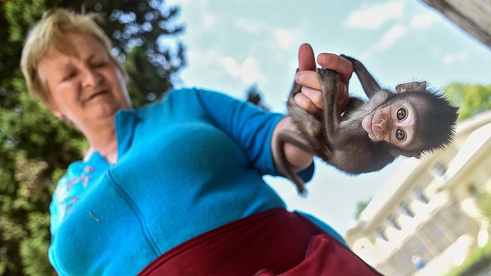 Сотрудница сухумского питомника Татьяна воспитала уже несколько десятков малышей, от которых отказались матери