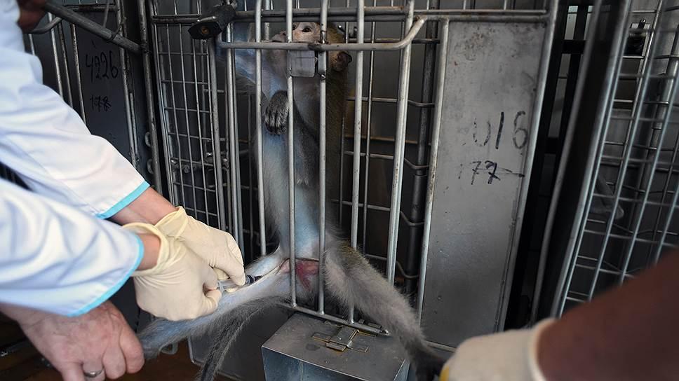 Ни одно лекарство для детей и беременных не может быть запущено в производство без проверки безопасности на приматах